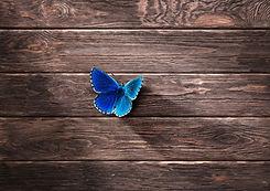 butterfly Large.jpg