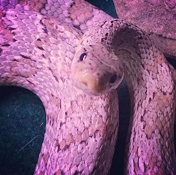 I love love love this snake.jpg