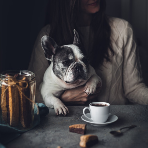 a portrait of a french bulldog at a table with coffee and cookies.