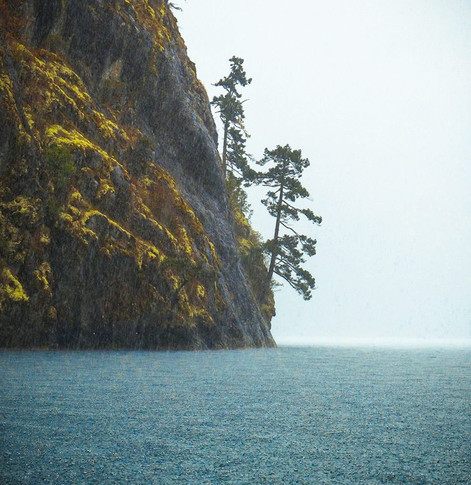 portrait of a rainy mountainside dropping off into the ocean and two small trees on the right side near the waters edge.
