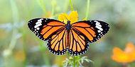 butterfly foto.jpg