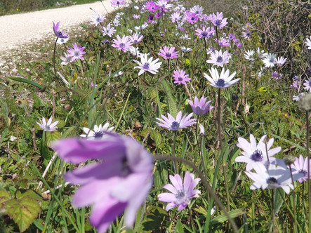 Puglia Spring Wildflowers