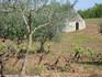 Trulli of Puglia, Ostuni countryside