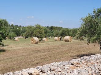 Beautiful Rural Scenery, Aqadutto di Puglia