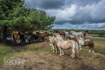 A fab visit to The New forest