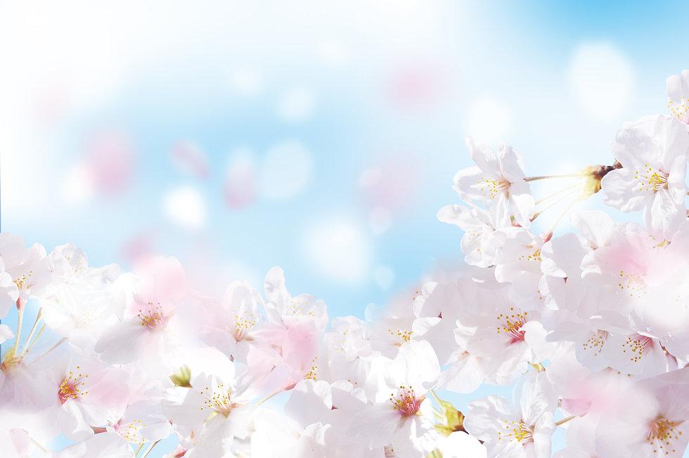 Beautiful cherry landscape.jpg