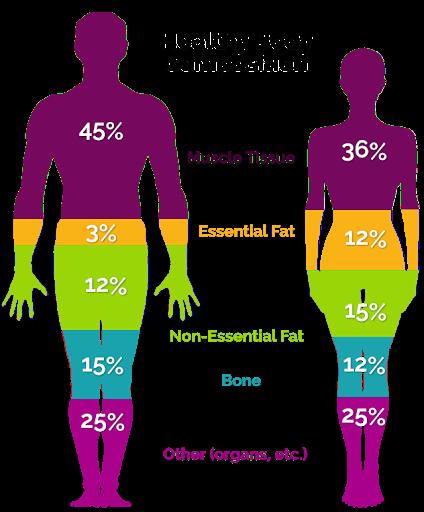 Inbody Body Composition Analysis
