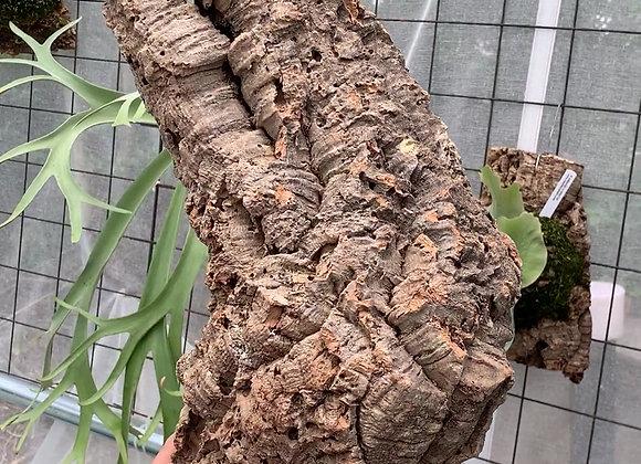 Virgin Cork Bark コルク樹皮チューブ型⑧