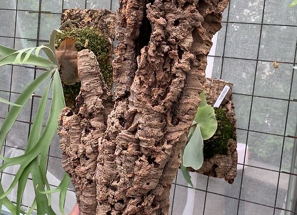 Virgin Cork Bark コルク樹皮チューブ型⑨