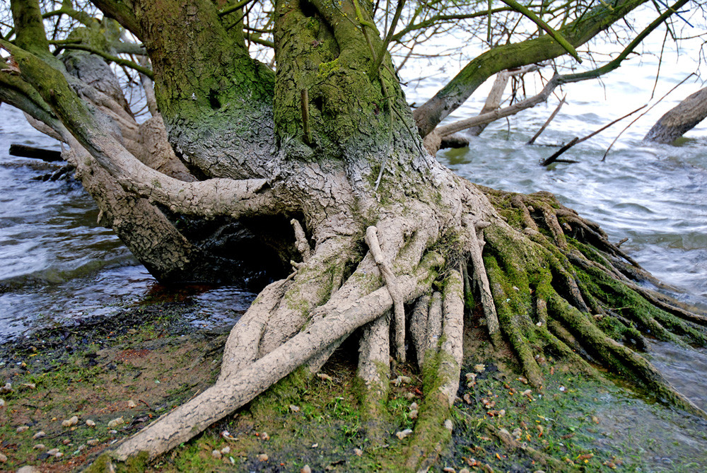 Image of tree roots symbolize getting to the root cause of disease using functional medicine.