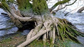 """Las raíces de una esencial natural llamada """"YO"""""""