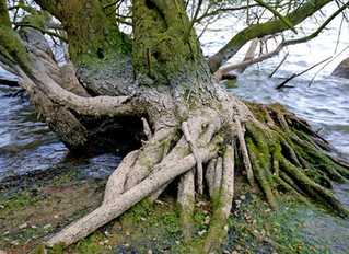 Roots: a meaningful mixed-up metaphor