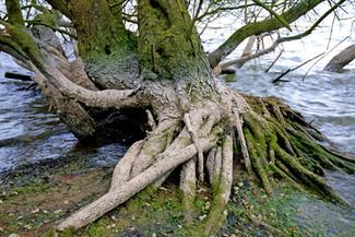 Buscando raíces