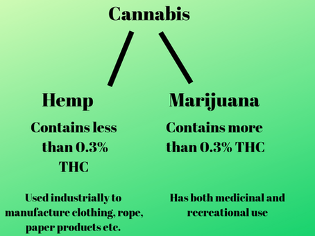 Hemp Derived CBD Oil Versus Hemp Terpenes