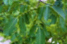 walnut-3471115_1920.jpg