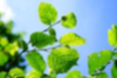 bush-1464722_1920.jpg
