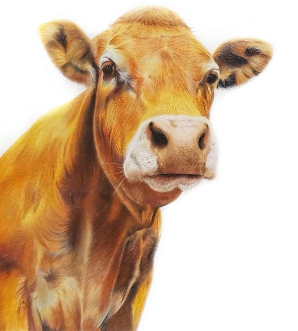 links koe.jpg