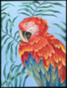 Scarlet Macaw.JPG.JPG