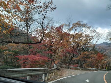 大正浪漫街道 紅葉