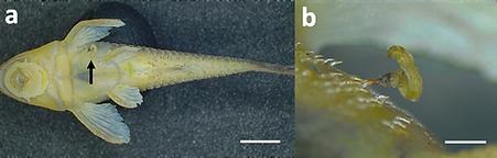 Figure 1 .png