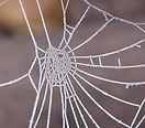 Canva - Spider Web.jpg