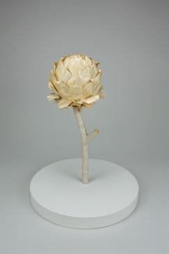 Artichoke, cynara cardunculus