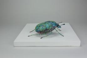 Beetle Has Landed