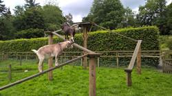Goat Walkway