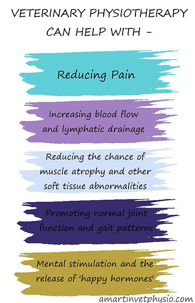 Benefits of physiotherapy AMVP.jpg