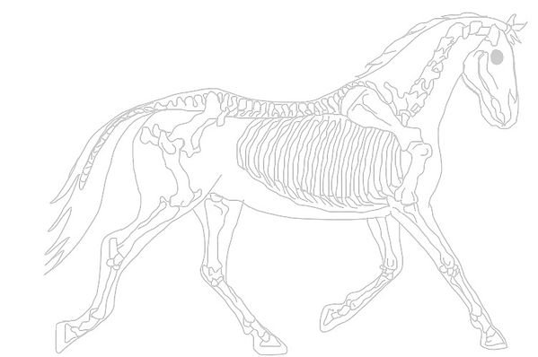 Horse%20skeleton%20trotting%20raw_edited