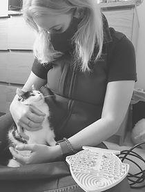 kitten%20vetphysio_edited.jpg