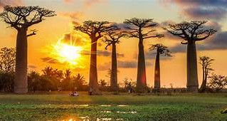 Traveling to Africa is Tough? Try Madagascar!