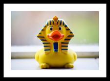 Derek Duck
