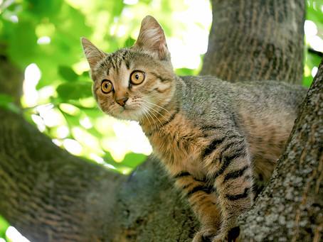 Animal Rescue Centre Thanks Cat Saving Tree Surgeon