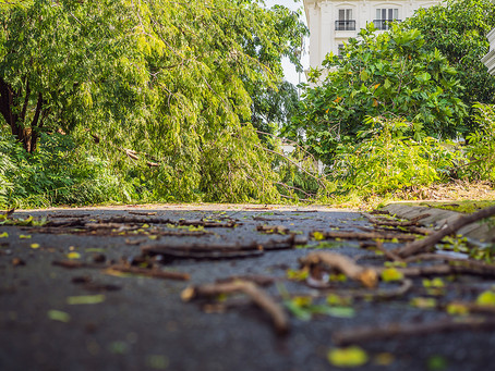 How To Protect Your Trees From Weather Damage