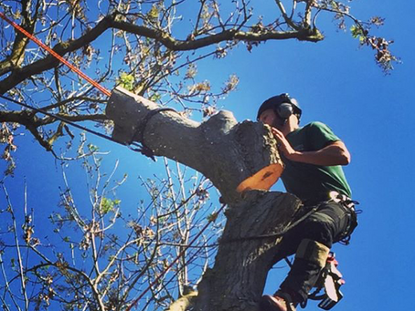 Four FAQs About Tree Surgery