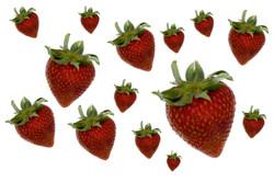 Background Strawberry II