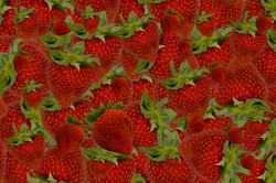 Strawberry Background IV