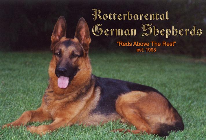German Shepherd Dog Breeder German Shepherd Puppy for Sale