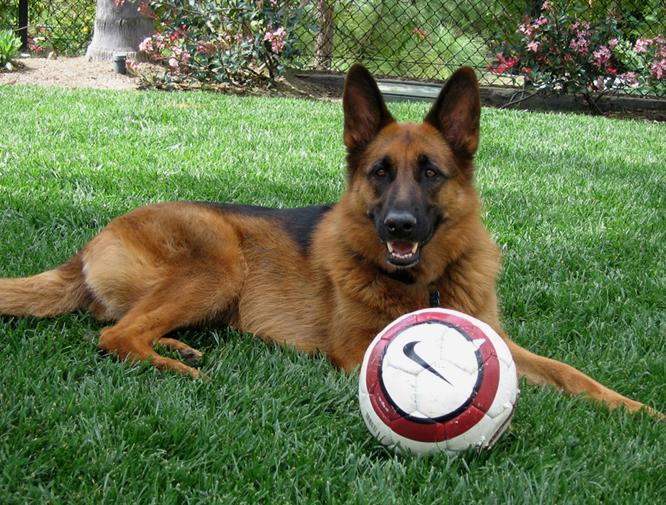 Soccer dog!