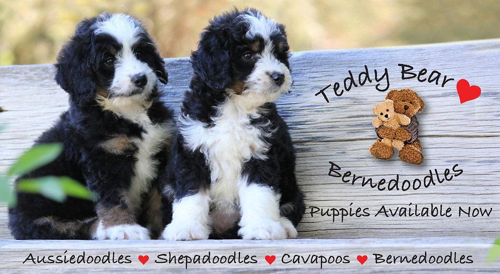 Teddy Bear Love cover photo.jpg