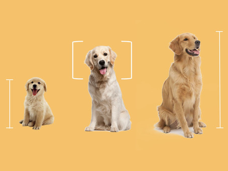 Dog weight chart for all breeds