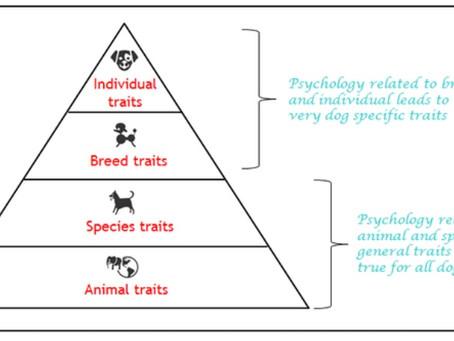 Dog Psychology - Part 2