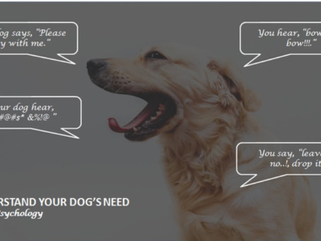 Dog Psychology - Part 1
