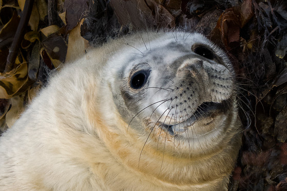 Juvenile Seal on beach