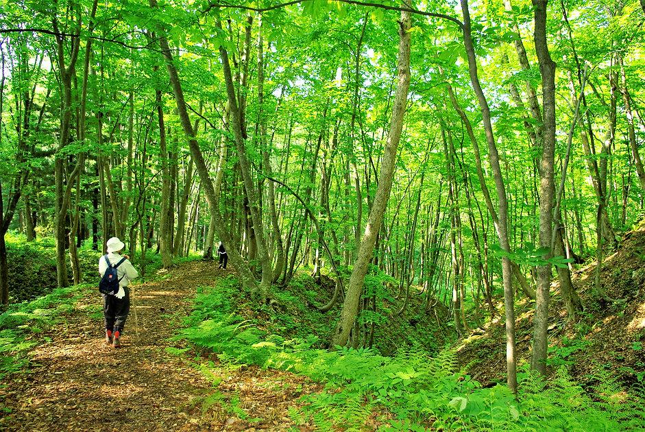 2009年6月2日 観察園散策道a.jpg