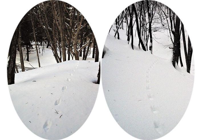 テンの足跡痕.jpg