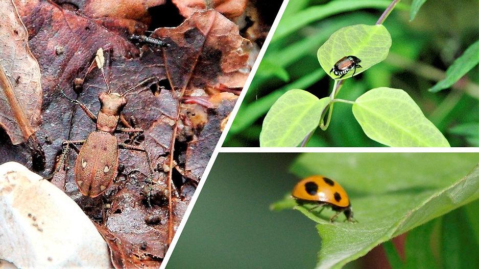 甲虫類その3.jpg
