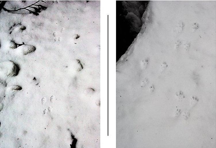 リスのFootprints2景.jpg