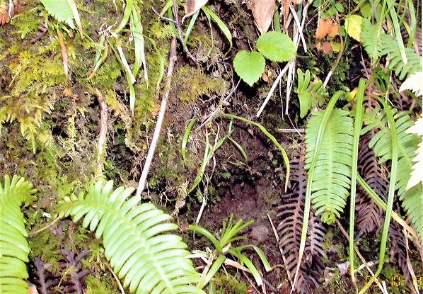 2010年8月3日 ヤチネズミの巣穴 観察園にて.jpg